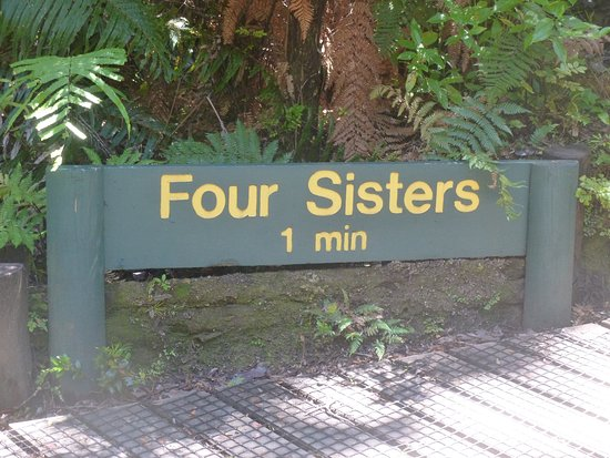 Waipoua Forest, New Zealand: Four Sisters