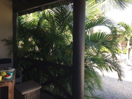 Bridanda Apartments Bonaire: Terrasse Tortuga mit vielen Palmen für Schatten und Sichtschutz, Blick von der Tür des Studios a