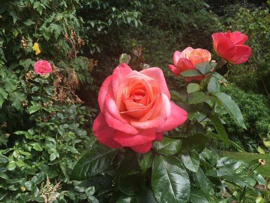 Renishaw, UK: Beautiful flowers