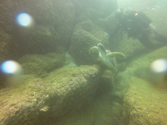 Hurricane Divers: Turtle