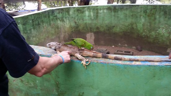 Cabarete, Republik Dominika: KICO WITH OTHER FRIEND