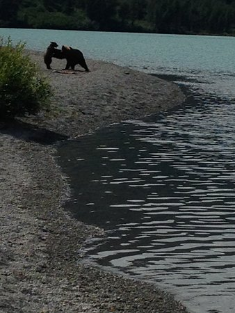 Kenai, AK: There were bears!