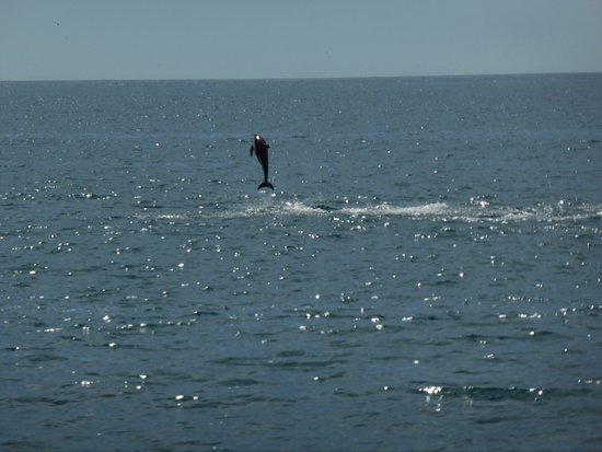 Kaikoura, Nuova Zelanda: Wild dolphin delighting us with its aerobics