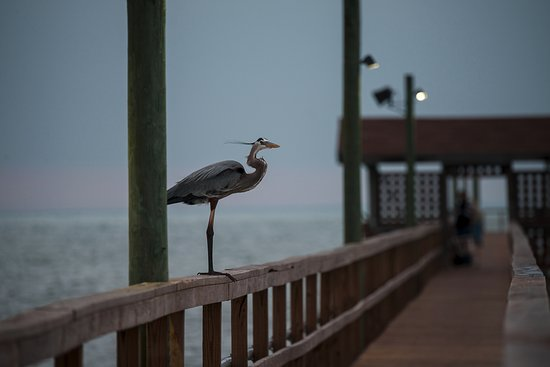 Laguna Reef Condominiums: Long fishing pier