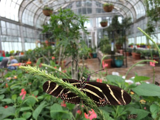 Butterflies Live Runs Each Year From Mid April To Mid October Come See These Tropical Beauties