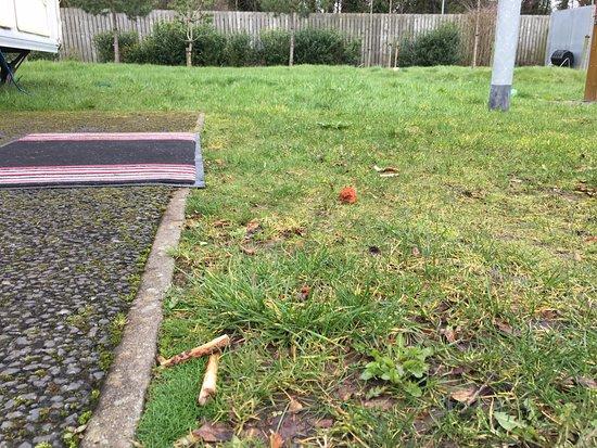 Jordanstown Loughshore Caravan Park: food bones lying on grass