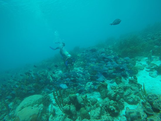 Dive Friends Bonaire: Great Diving! Water temp was 79 degrees in February !