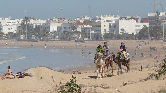 Essaouira Beach: à dromadaire
