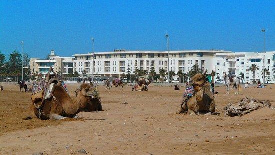 Essaouira Beach: sur l'immense plage