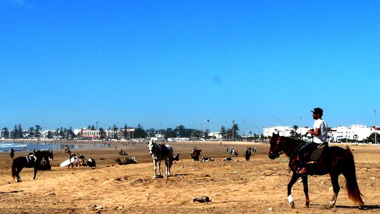 Essaouira Beach: à cheval