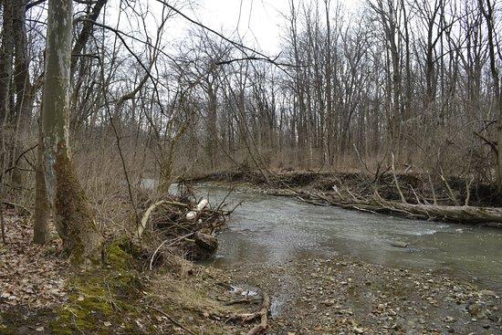 Mount Gilead, OH: Whetstone Creek