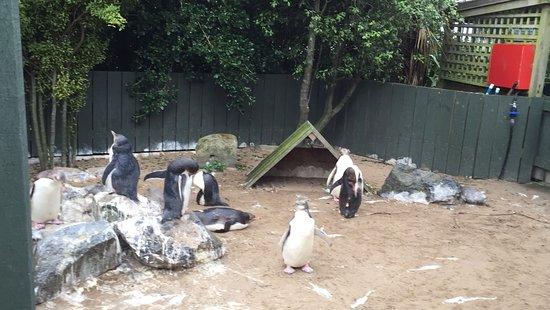 Penguin Place: photo0.jpg