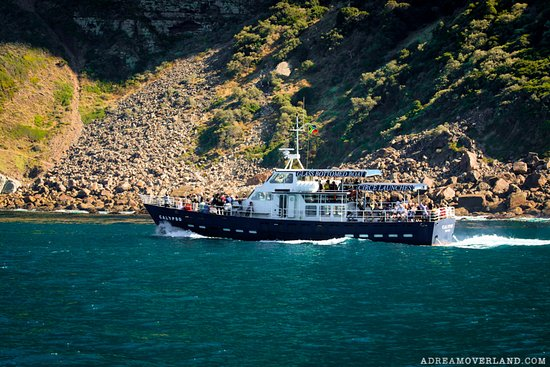 Baz Bus - Day Tours: A boat ride on Hout Bay to the Seal Colony