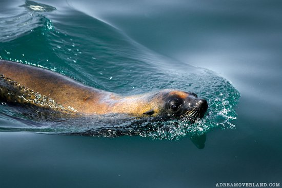 Baz Bus - Day Tours: Seal Colony
