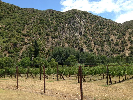 Peter Bayly Wines: Courtesy of Afri-Unique Tours