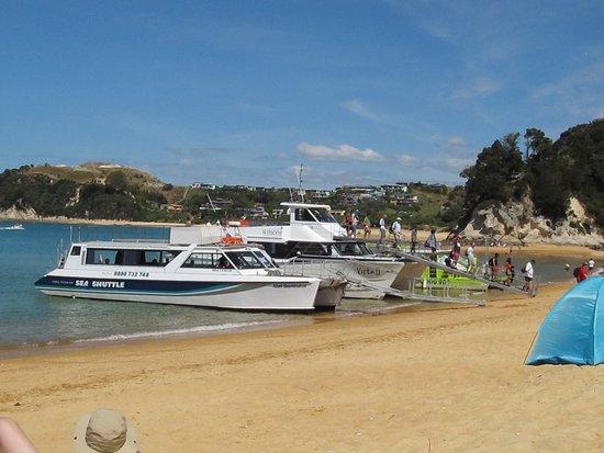 Kaiteriteri Beach: Launch trips