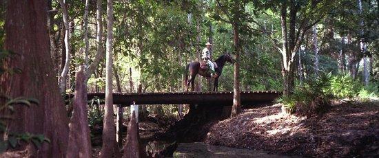 Clermont, FL: Bridge over Big Creek; Lake Louisa State Park