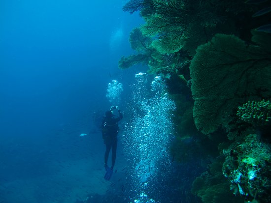 POINDIMIE , le mondes gorgones comme nul part ailleurs