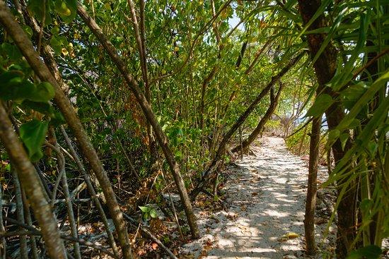 Landscape - Picture of Calala Island, Calala Island - Tripadvisor