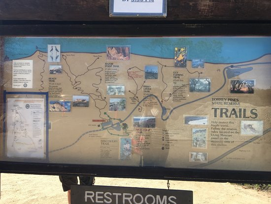 Torrey Pines State Natural Reserve: Beautiful scenery!  Also I saw a rattlesnake today.