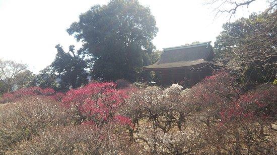 Fujiidera, Japan: 梅園3