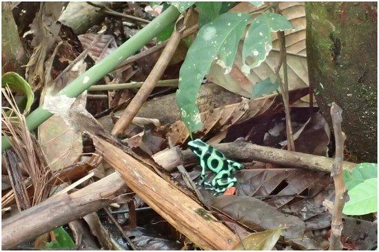 Frogs Heaven: photo0.jpg