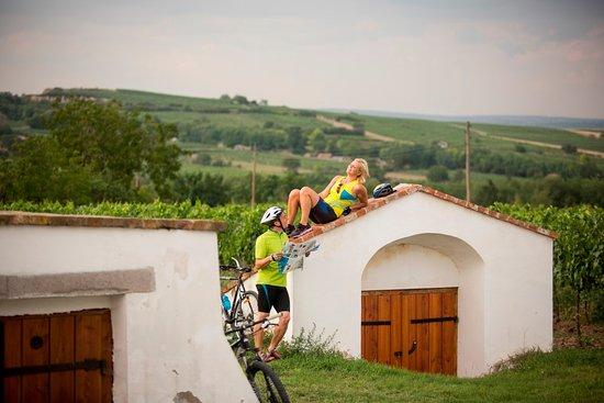 Mit dem Fahrrad reizvolle Plätze im Retzer Land entdecken...