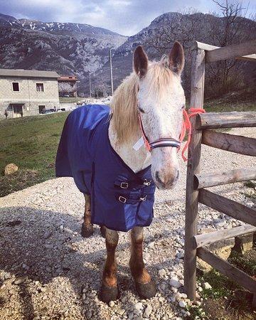 Ristorante dell'Agriturismo Casale Vitelli: Cavalli dell'agriturismo!