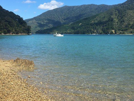 Marlborough Region, Nowa Zelandia: nearby shore