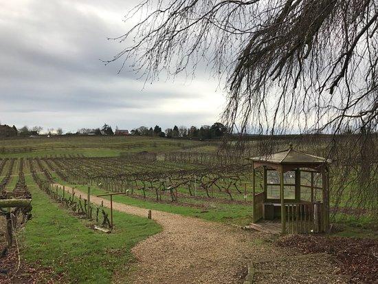 Three Choirs Vineyard : Gravel paths so no soggy shoes.