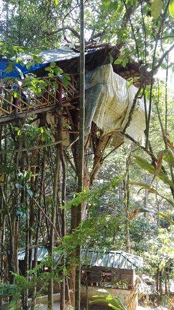 Abraham's Spice Garden: Tree house
