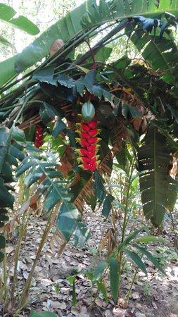 Abraham's Spice Garden: Pretty