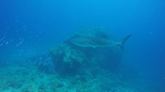 Blue Planet Divers: photo0.jpg