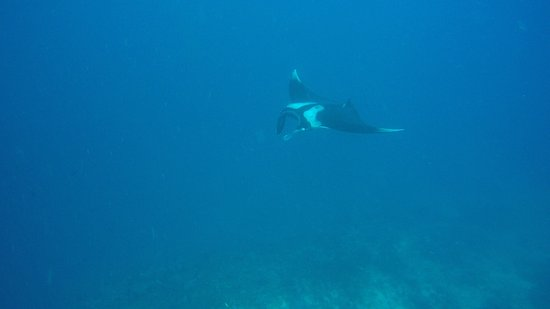 Blue Planet Divers: photo1.jpg