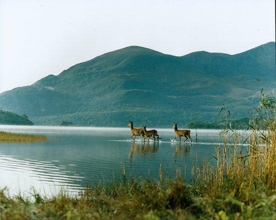 Killarney Fishing Adventures