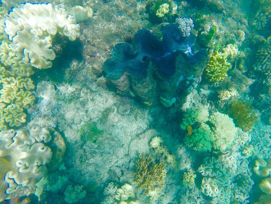 Reef Daytripper: photo1.jpg