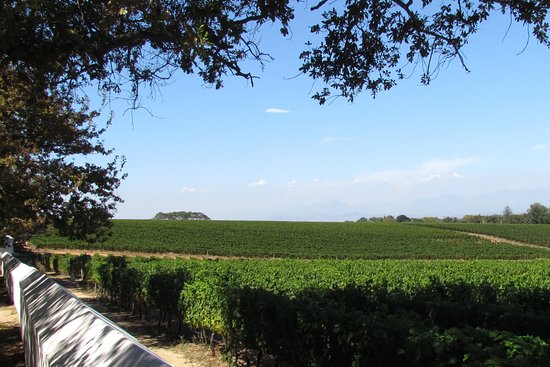 Constantia, South Africa: Vineyards