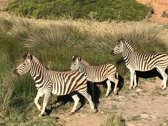Albertina, Südafrika: photo6.jpg