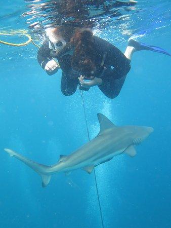 Umkomaas, Νότια Αφρική: Shark Snorkel