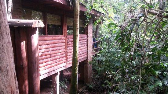 La Aldea de la Selva Lodge: Vista desde habitación