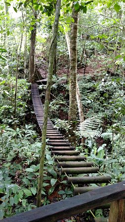 "Terraventuras Jungle Expeditions: walk bridge way above the jungle floor. right out of ""Indiana Jones""!"