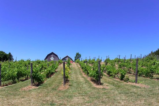 County Cider Company & Estate Winery : View of the Tasting Room & Restaurant from the bottom of hill.