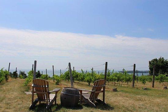 County Cider Company & Estate Winery: The Cider Company patio restaurant.