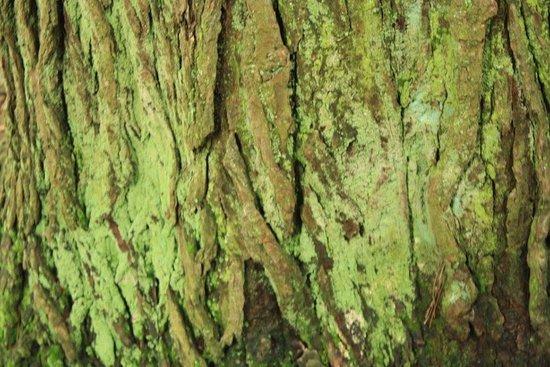 Newport, PA: Mossy trees enchant you!