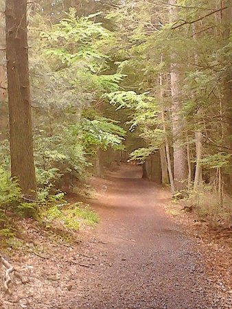 Newport, PA: Cozy romantic trails are perfect for hand in hand dates with your love!