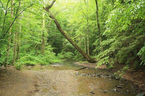 Little Buffalo State Park: Dear little streams await your gaze!