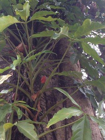 National Park of Palenque: Orchidée sur un arbre.