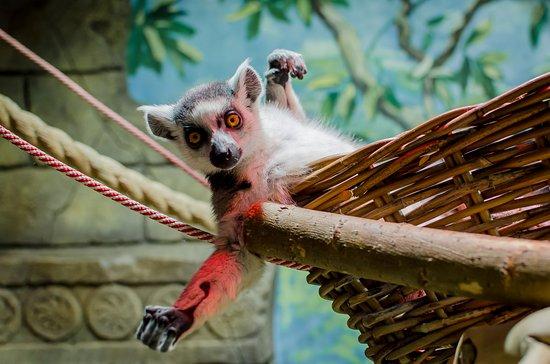 Touching Zoo Bely Kenguru