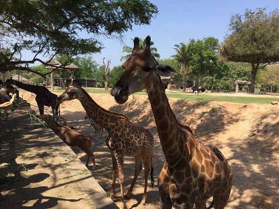 Khao Kheow Open Zoo: photo0.jpg