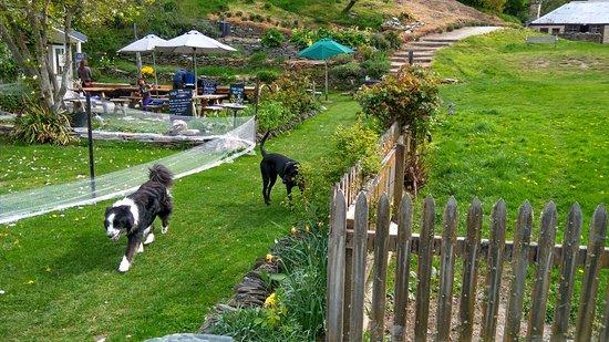 Arrowtown, New Zealand: cute doggies